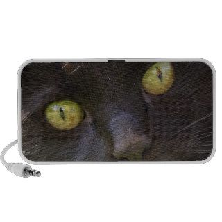 Lucky black cat notebook speaker