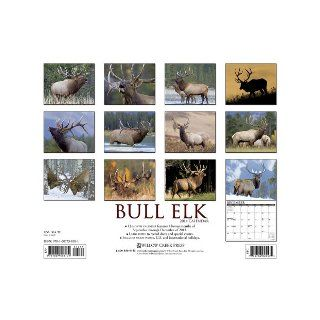 Bull Elk 2014 Wall Calendar Willow Creek Press 9781607558101 Books