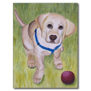 Play With Me. Yellow Labrador Retriever Postcard