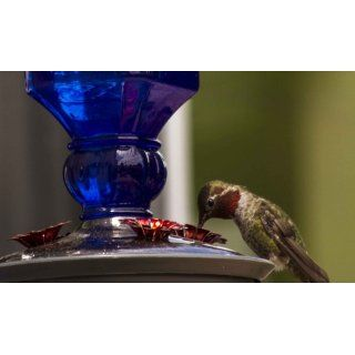 Perky Pet 8117 2 Cobalt Blue Antique Bottle Hummingbird Feeder, 16 Ounce  Pet Bird Feeders  Patio, Lawn & Garden