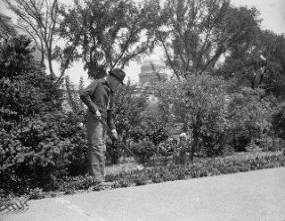 1937 photo Congressional Gardener at hobby. Washington, D.C., May 7. Rep. Wil e3