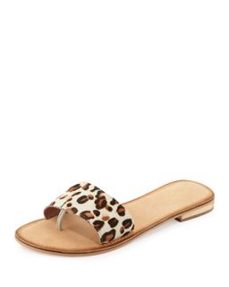 City Slicker Leopard Print Calf Hair Sandal   Seychelles   Tan (10B)